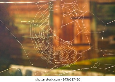 Beautiful cobweb with, golden sunrise shining on cobweb, bright transparent and glittering, blurred natural backgrounds. Selective focus. Magical cobweb on a colorful background, day, open air, summer