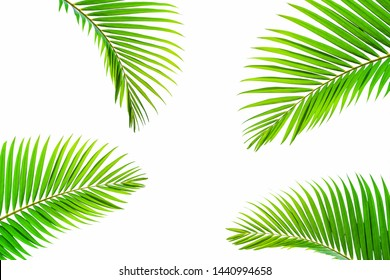 Beautiful coconut leaf isolated on white background, tropical summer background