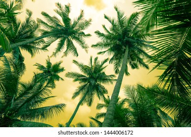 Beautiful coconut palm tree forest in sunshine day clear sky background color fun tone. Travel tropical summer beach holiday vacation or save the earth, nature environmental concept.