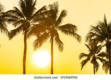 Beautiful coconut palm tree with sky at sunset or sunrise time