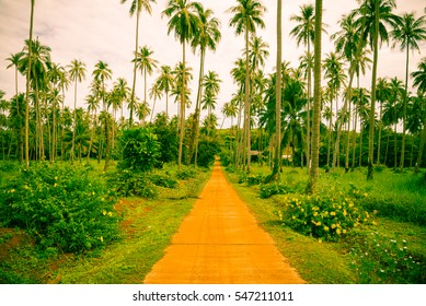 Beautiful coconut palm trees farm in Koh Mak island Thailand - Vintage filter effect