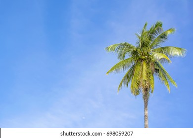 Beautiful coconut tree Bright sky background in thailand