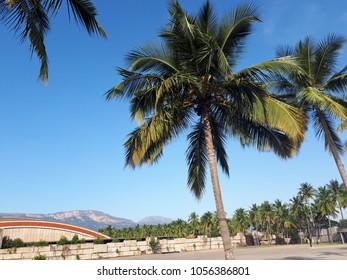 Beautiful coconut tree under blue sky at  Isha yoga near Coimbatore tamil nadu India