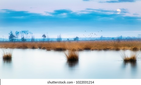 Beautiful cold heathland with frozen water.  Nice reflection on the water. Moon and birds give the picture a nice mood.