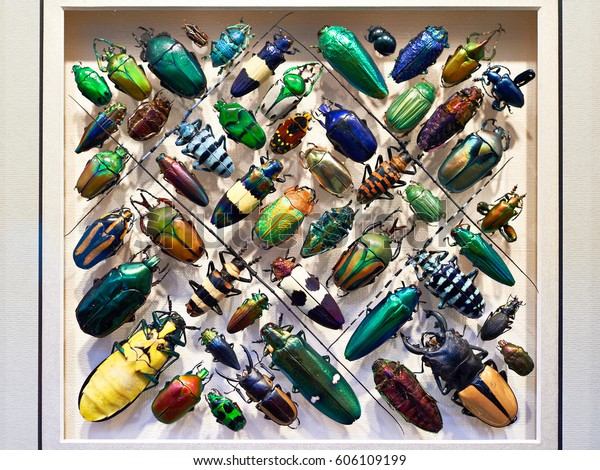 Beautiful collection of beetles in a frame