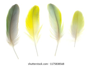 Beautiful  collection parrot lovebird feather isolated on white background