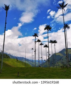 Beautiful Colombian nature and landscape of famous Cocora Valley near Salento, Quindio, Colombia. Typical tall wax palms Ceroxylon Quindiuense surrounded by green Andes Mountains and fog cloud forests