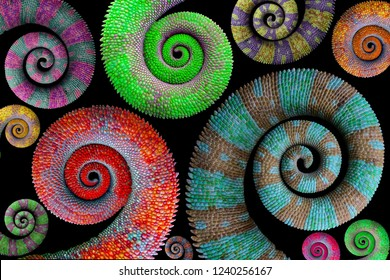 Beautiful color chameleon tails, chameleon tails