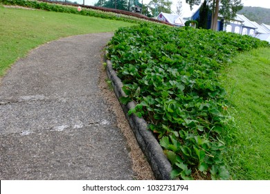 beautiful color flower and walk way in Thailand asia. the seed-bearing part of a plant