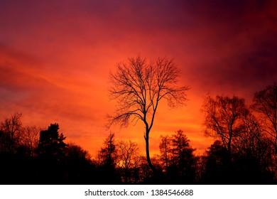 Beautiful color photo red sunset spring sky in the park