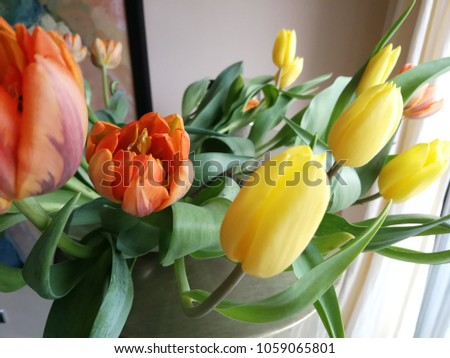 Beautiful Color Tulip Spring Season House Stock Photo Edit Now