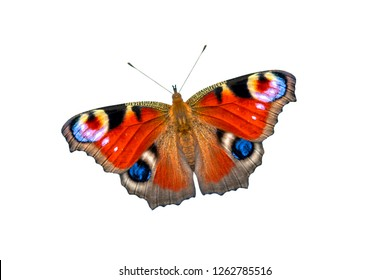 decc71a58e9bc Beautiful colored butterfly on a white background. European Peacock  butterfly (Inachis io)