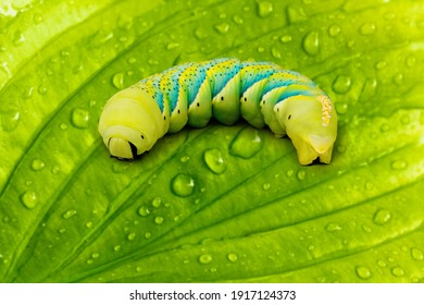Beautiful colored caterpillar on a green leaf