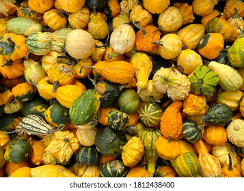 Beautiful colored pumpkins just harvested for the Halloween
