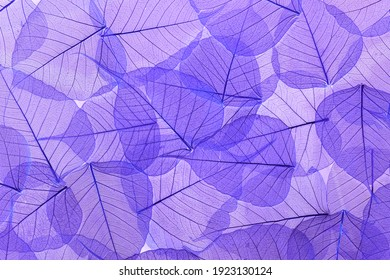 Beautiful colored transparent leaf skeletons. Textured effect. This wonderful lace is perfect for your design.