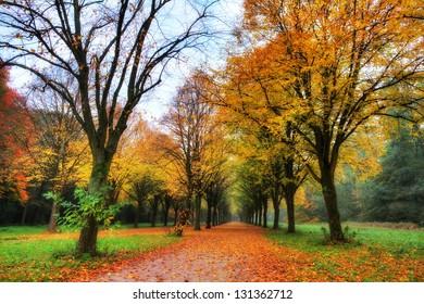 Hermosos árboles de colores en el corazón de Amsterdamse bos (madera de Amsterdam) en los Países Bajos. HDR