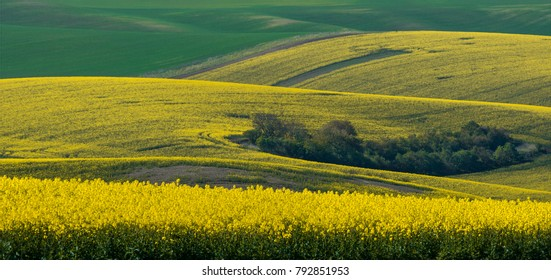 Beautiful and colorful abstract landscape, with rolling hills, green wheat fields and yellow rape fields in South Moravia, Czech Republic
