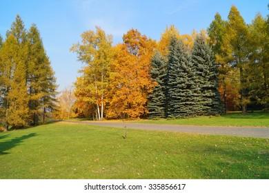 Beautiful, colorful autumn - autumn alley in botanic garden