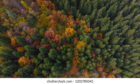 beautiful colorful autumn in forest