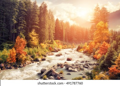 Beautiful colorful autumn landscape with a stream and forest in toned colors, vintage style with warm flare