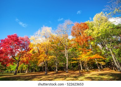 Beautiful colorful Autumn leaves in Rochester City of New York., Colorful Autumn Leaf Season.