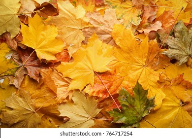 Beautiful colorful autumn leaves, top view