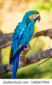 Beautiful colorful blue yellow macaw parrot
