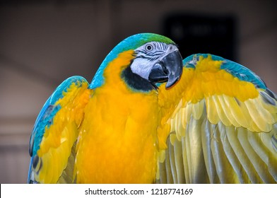 Best Macaw Images, Stock Photos & Vectors | Shutterstock