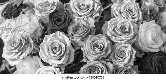A beautiful and colorful bouquet of big roses in different shades of grey background