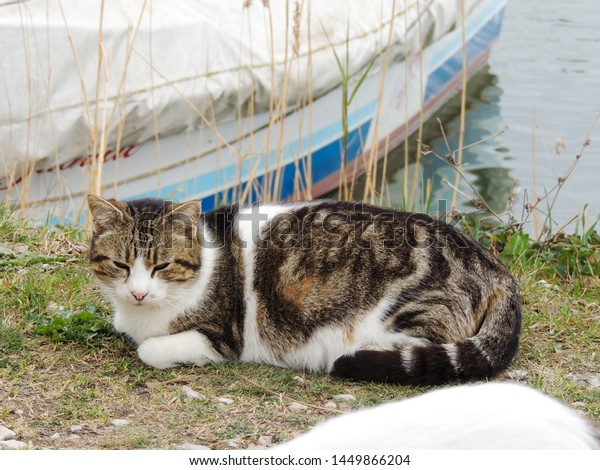 beautiful-colorful-cat-lying-outdoor-600