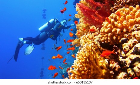 Beautiful colorful coral reef with shoal of red fish, man scuba diver on the background