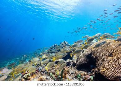 Schönes, buntes Korallenriff und tropische Fische unter Wasser in der Karibik St. Lucia
