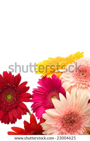 Beautiful Colorful Daisy Flowers Space Messages Stock Photo Edit