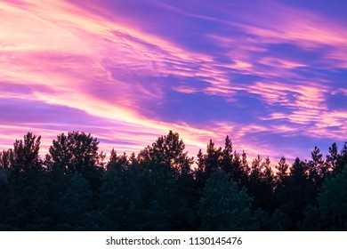 Beautiful, colorful and dramatic sky at sunset. Silhouette of forest.