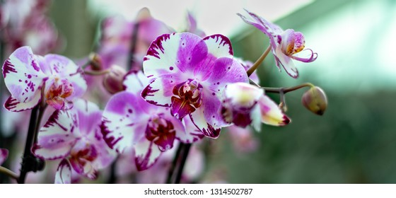 Beautiful colorful exotic orchid flowers