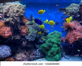 Beautiful colorful fish at the aquarium