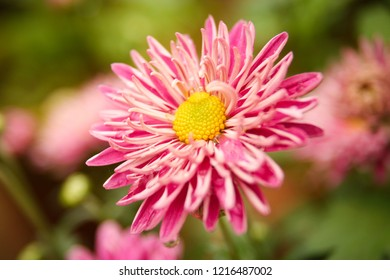 Beautiful colorful flower close-up