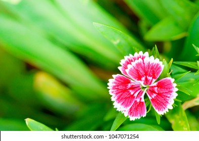 beautiful colorful flower in the garden , beautiful nature