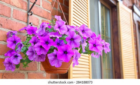 beautiful colorful flowers in the flower bed under the window