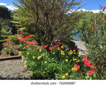 Beautiful colorful flowers in spring time