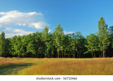 beautiful colorful forest, meadow and sky at sunset