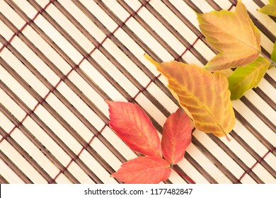 Beautiful colorful green, red and yellow autumn maple leaves and an envelope with a blank message on a brown background