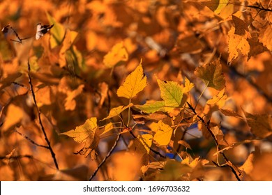 Beautiful colorful leaves in autumn