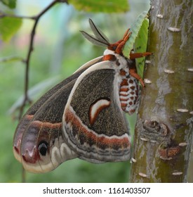 beautiful colorful moth on tree trunk