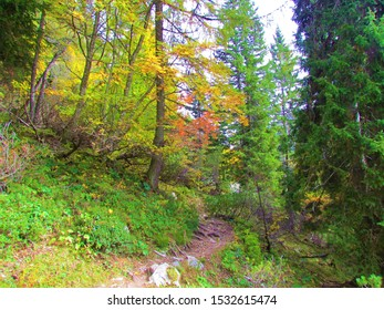 Beautiful colorful moutain forest of rowan or mountain ash, european larch and spruce forest in beautiful autumn yellow, red and green colors on the path  from Zelenica to Vrtača, Slovenia