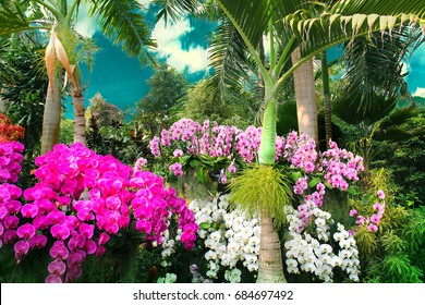 Beautiful colorful orchids adorn the exotic park under blue sky.
