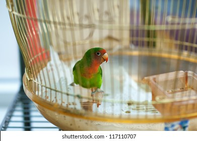 Beautiful colorful parrot in home cage.