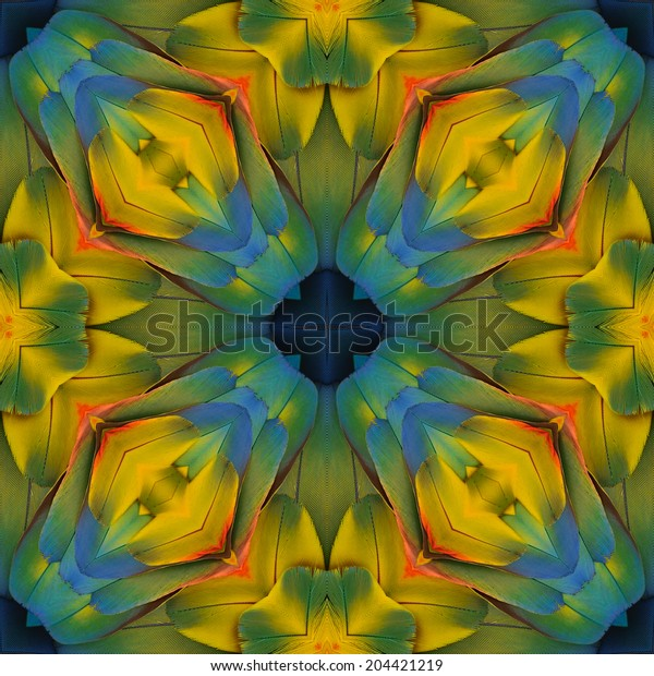 Beautiful colorful pattern background texture made from Scarlet Macaw feathers.