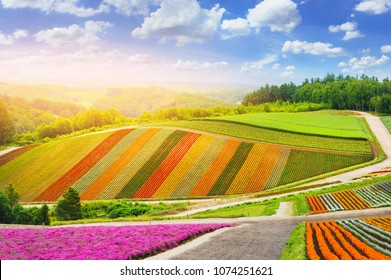 beautiful colorful of rainbow flowers garden on hill at Biei farm, Hokkaido province in japan