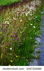 Beautiful and colorful  roadside meadow with hay, clover and other wild flowers blooming. Cultural biotope and biodiversity are most important things today